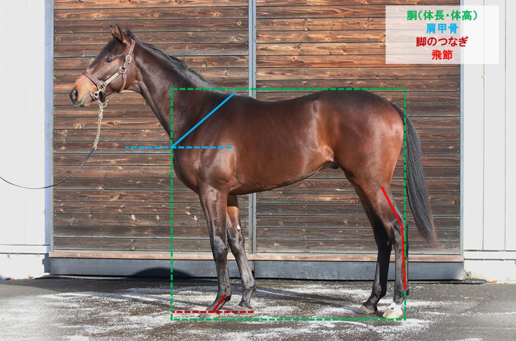 サトノエスペランサ 馬体診断