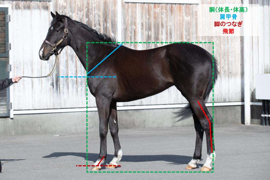 モーソンピーク 馬体診断