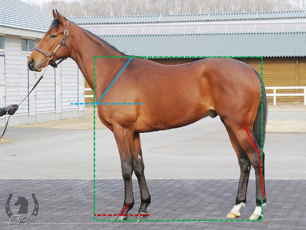 リンドブラッド 馬体診断