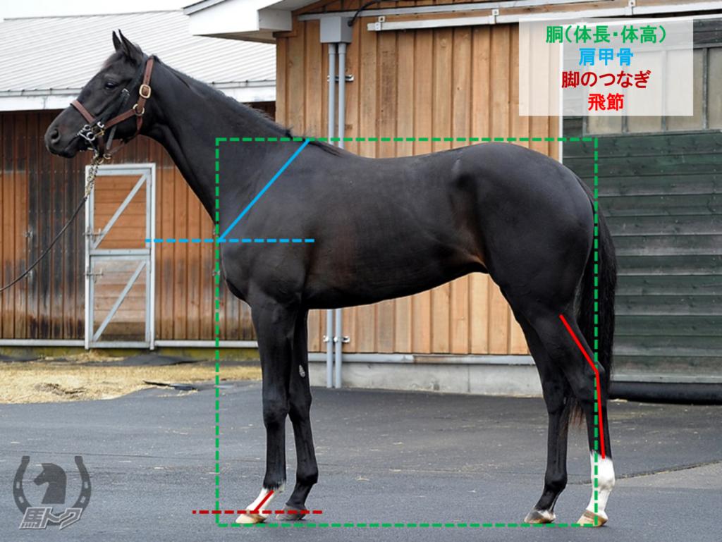ヴァーダイト 馬体診断