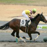 有力馬の一頭『クイックファイア』