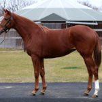 ファートゥア 血統評価 新種牡馬エピファネイアの素質馬を徹底分析!【POG参考】
